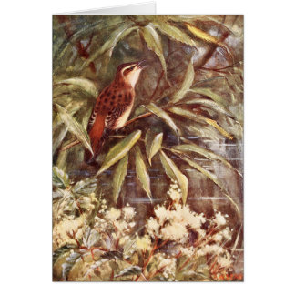 Beautiful Sedge Warbler Art Cards
