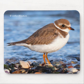 Beautiful Semipalmated Plover at the Beach Mouse Pad