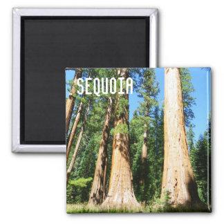Beautiful Sequoia Magnet! 2 Inch Square Magnet