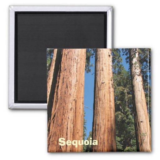 Beautiful Sequoia Magnet!