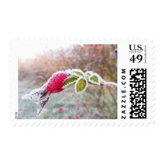Beautiful set of Rosehip print stamps
