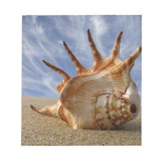 Beautiful shell memo pads