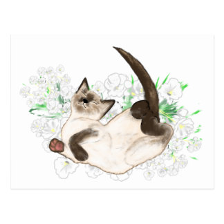 Beautiful Siamese Cat art gifts and accessories Postcard