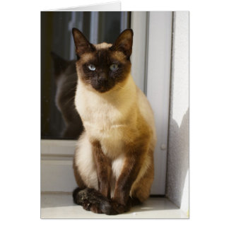 Beautiful Siamese Cat Greeting Cards