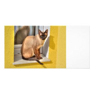 Beautiful Siamese Cat Picture Card