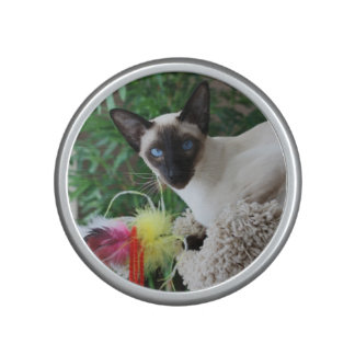 Beautiful Siamese Cat Playing With Toy Bluetooth Speaker