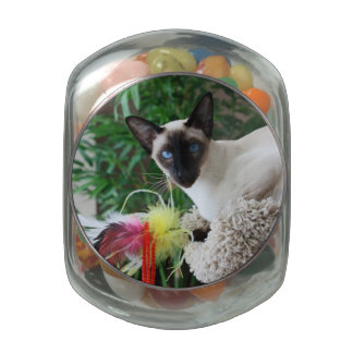 Beautiful Siamese Cat Playing With Toy Jelly Belly Candy Jar