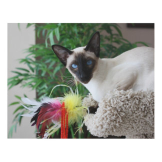 Beautiful Siamese Cat Playing With Toy Panel Wall Art