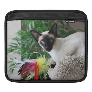 Beautiful Siamese Cat Playing With Toy Sleeve For iPads