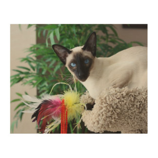 Beautiful Siamese Cat Playing With Toy Wood Print