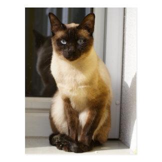 Beautiful Siamese Cat Postcard