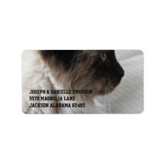 Beautiful Siamese Kitty Label
