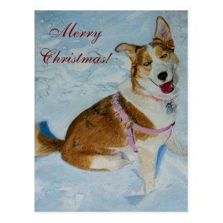 Beautiful Siberian Husky in Snow Postcard