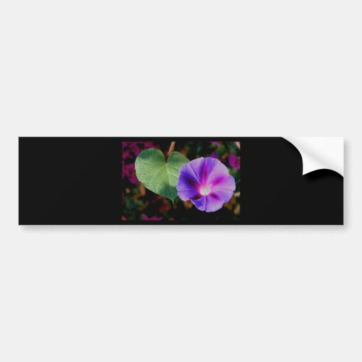 Beautiful Single Morning Glory Flower and Leaf Bumper Stickers