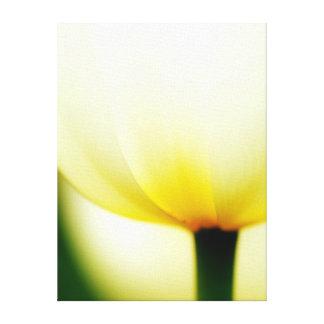 Beautiful Single Tulip Wrapped Canvas