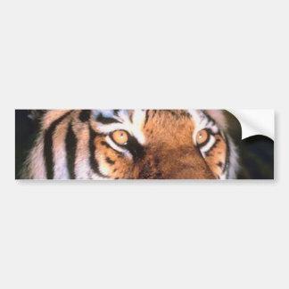Beautiful Sitting Tiger Bumper Sticker