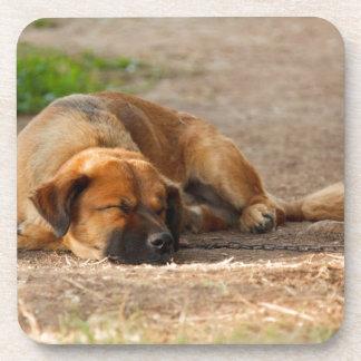 Beautiful Sleeping Dog Drink Coaster