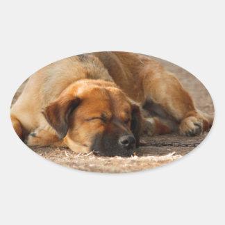 Beautiful Sleeping Dog Oval Sticker