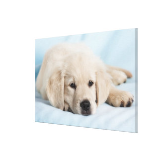 Beautiful Small Puppy Canvas Print