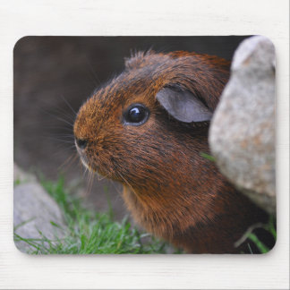 Beautiful, Smooth, Gold Agouti Guinea Pig Mouse Pad