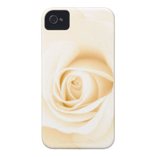 Beautiful soft cream colored rose flower floral iPhone 4 covers
