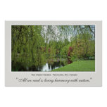Beautiful soft, green spring willow tree and pond. print