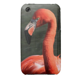 Beautiful Solitary Pink Flamingo iPhone 3G/3GS iPhone 3 Case