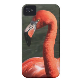 Beautiful Solitary Pink Flamingo iPhone Case