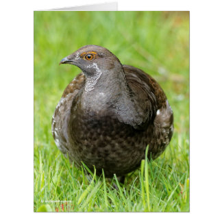 Beautiful Sooty Grouse in the Grass Card