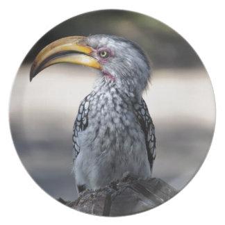 Beautiful Southern Yellow-billed Hornbill bird Dinner Plate