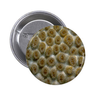 Beautiful Species of Caribbean hard coral Pinback Button