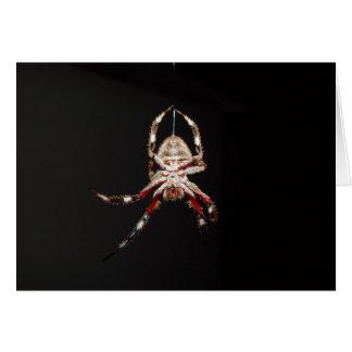 Beautiful Spider Climbing At Night, Ballajura, Wes Greeting Cards