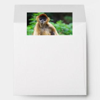 Beautiful Spider Monkey Envelope