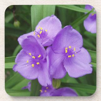 Beautiful Spider Wart Bloom Coaster Set