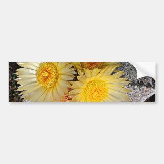 Beautiful Spineless Star Cactus Blooms Bumper Sticker