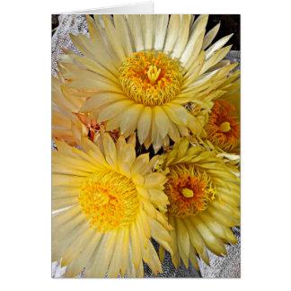 Beautiful Spineless Star Cactus Blooms Card