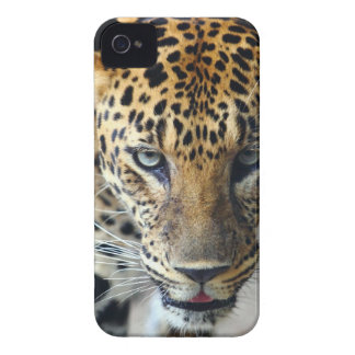 Beautiful spotted leopard iPhone 4 case