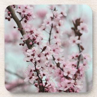 Beautiful Spring Cherry Blossom Drink Coaster