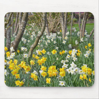 Beautiful spring daffodil garden mouse pad
