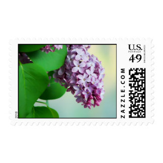 Beautiful Spring Lilac Postage