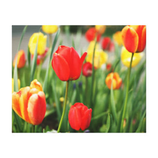 Beautiful Spring Tulips in Bloom Canvas Print