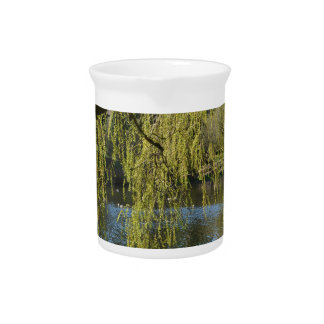 beautiful spring willow trees by water pond. beverage pitcher