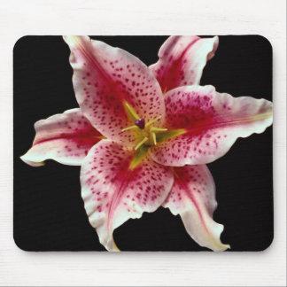 Beautiful Stargazer lily Mouse Pad