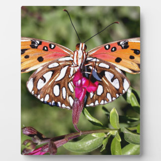 Beautiful Stunning Spotted Fantail Butterfly Photo Plaque