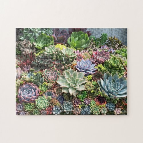 Beautiful Succulents Jigsaw Puzzle