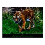 Beautiful Sumatran Tiger Post Cards