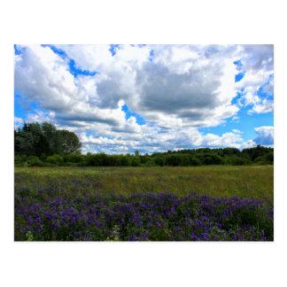 Beautiful Summer Afternoon 2016 Postcard