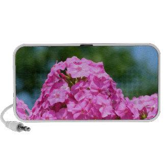Beautiful summer flowers photo pink purple phlox iPod speakers