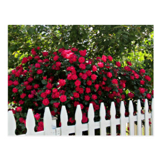 Beautiful Summer Garden; Picket Fence. Postcard