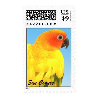 Beautiful Sun Conure Stamp